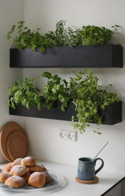 plantes-cuisines